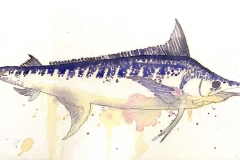 blue-marlin-for-web