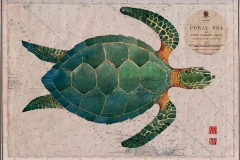 green-turtle-for-web