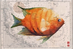 orange-angle-fish-for-web