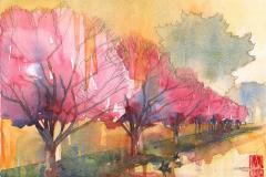 spring-blossom-BM